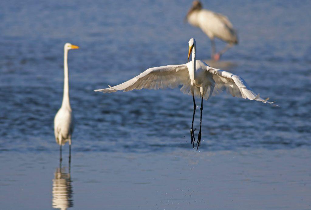 Crystal River National Wildlife Refuge Crystal River, Florida.