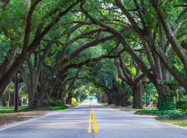 Avenue of Oaks in Aiken South Carolina